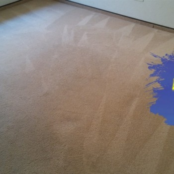 Carpet Cleaning After 1