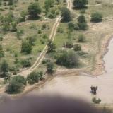 Elephants on Dam