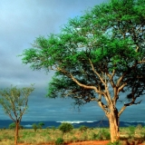 Jock of the Bushveld Boskombuis & Self Catering Chalets