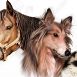 Humble Horses & Paws Physiotherapy